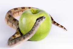 Serpente e maçã imagens de stock