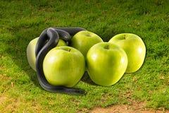 Serpente e mele neri su erba verde Fotografia Stock Libera da Diritti