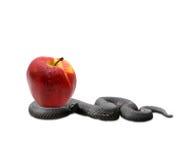 Serpente e uma maçã Fotografia de Stock