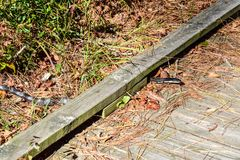 Serpente furtivo na fuga Fotografia de Stock Royalty Free