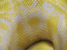 Serpente giallo Fotografia Stock Libera da Diritti
