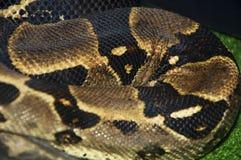 Serpente la texture et les milieux Plan rapproché repéré de python image stock