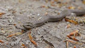 Serpente liscio Immagini Stock Libere da Diritti