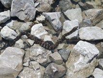 Serpente na entulho Fotos de Stock