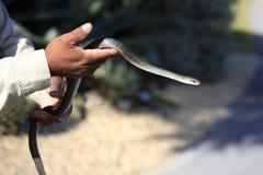 Serpente nas mãos Foto de Stock Royalty Free