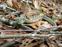 Serpente nas madeiras Fotos de Stock Royalty Free