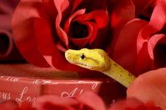 Serpente nas rosas Fotografia de Stock Royalty Free