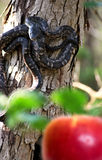 Serpente nel giardino Fotografie Stock Libere da Diritti
