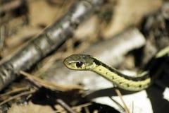 Serpente nell'erba Fotografia Stock Libera da Diritti