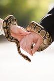 Serpente nella mano Fotografia Stock Libera da Diritti