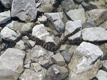 Serpente nelle macerie Fotografie Stock