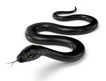 Serpente nero III Fotografie Stock
