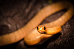 Serpente no log Foto de Stock Royalty Free