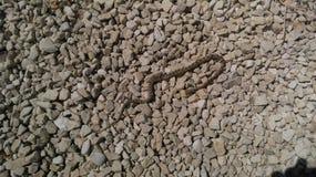 Serpente pequena em Israel imagens de stock