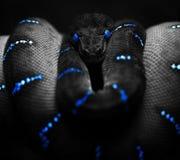 Serpente preta Imagem de Stock Royalty Free