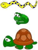 Serpente, rana e tartaruga Fotografia Stock