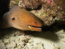 Serpente subaquática Imagem de Stock