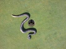 Serpente sul verde Fotografie Stock Libere da Diritti