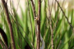 Serpente sull'albero Fotografie Stock