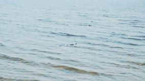 Serpente sulla spiaggia Estate Il pericolo video d archivio