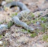 Serpente sulla terra all'aperto fotografia stock