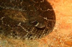 Serpente tossico - crotalo Immagine Stock Libera da Diritti