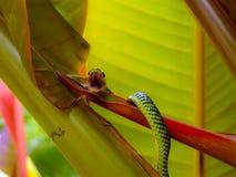 Serpente verde Immagine Stock Libera da Diritti
