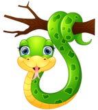 Serpente verde feliz no ramo Fotos de Stock Royalty Free