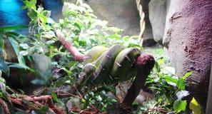 Serpente verde torcida imagens de stock royalty free