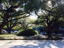 Serpenteando ramos Imagens de Stock Royalty Free