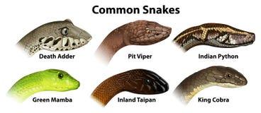 Serpentes comuns ilustração do vetor