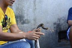 Serpentez le magicien d'enchanter s'asseyant dans la rue avec son python photo libre de droits