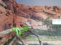 serpenti Fotografia Stock Libera da Diritti