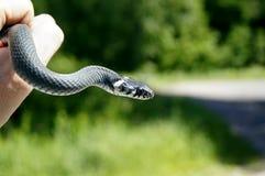 Serpenti fatti a mano Fotografia Stock Libera da Diritti