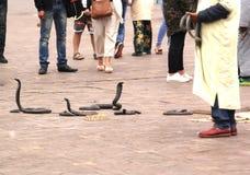 Serpenti sull'allerta Immagini Stock