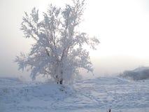 Serpentina de la guirnalda del árbol de navidad del juguete de la Navidad del día de fiesta de Frost Imagenes de archivo