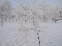 Serpentina de la guirnalda del árbol de navidad del juguete de la Navidad del día de fiesta de Frost Fotos de archivo