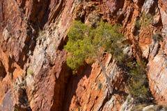 Serpentine Gorge Tree imagen de archivo libre de regalías