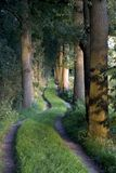 Serpentine grass lane in the forest Royalty Free Stock Image