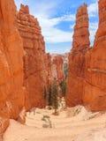 Serpentine Hiking Trail in Bryce con i menagrami torreggianti fotografia stock