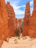 Serpentine Hiking Trail in Bryce with Towering Hoodoos. Serpentine Hiking Trail Descends into Canyon Surrounded by Towering Red Hoodoos with Pine Trees at Bryce Stock Photo