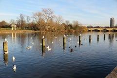 Serpentine Lake en Hyde Park foto de archivo