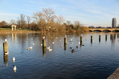 The Serpentine Lake in Hyde Park. London Stock Photo