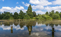 Serpentine lake in Hyde Park, London. View of Serpentine lake in Hyde Park in the summer, London, UK Royalty Free Stock Image