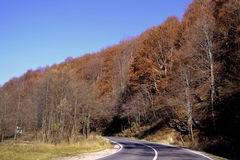 On serpentine mountain. Hardwood Fall in the mountains. The forest is filled with colors. The road runs through the quiet mountain peaks stock photo