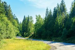 Serpentine uphill through country forest. Serpentine winding through country forest. beautiful scenery on a bright summer day. explore back country - travel by royalty free stock images