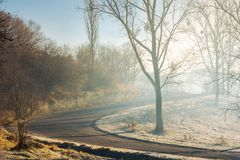 Serpentine uphill through forest in morning mist. Lovely transportation scenery in november royalty free stock photo