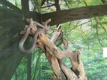 serpents Image libre de droits