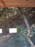 serpents Photo libre de droits