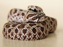 Serpiente: ¿pensativo, triste, asustado, o sorprendido? Imagen de archivo libre de regalías